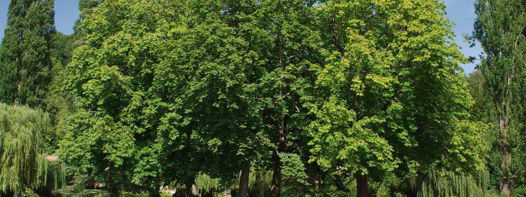 Abattage D Arbres Autorisation : abattage d 39 un arbre autorisation procedure arbres ~ Premium-room.com Idées de Décoration